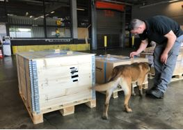 "Dog handler and his ""colleague"" searching for explosives  -  picture: DUS Cargo"