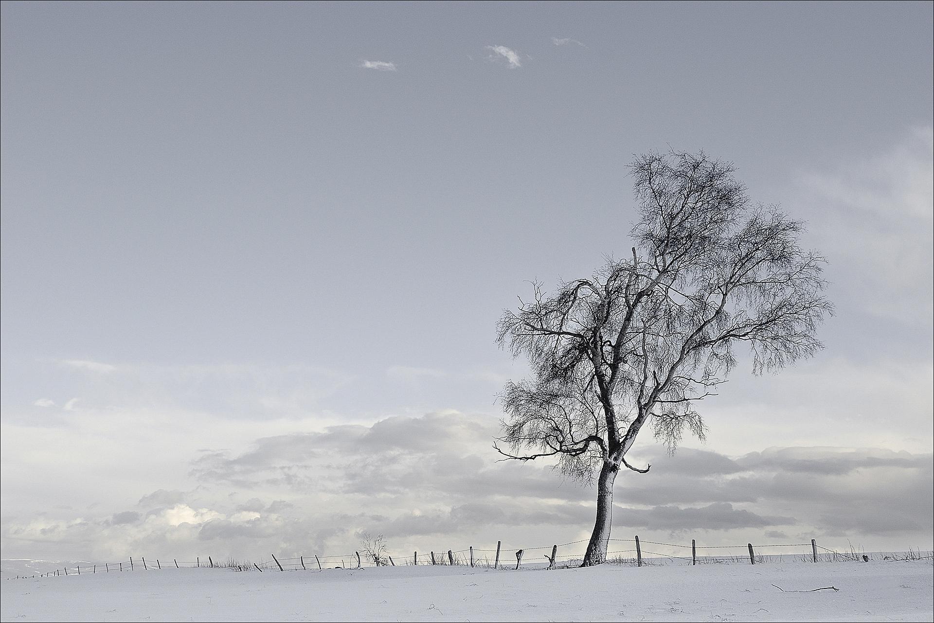 L'arbre à manières   Photo: B Raballand