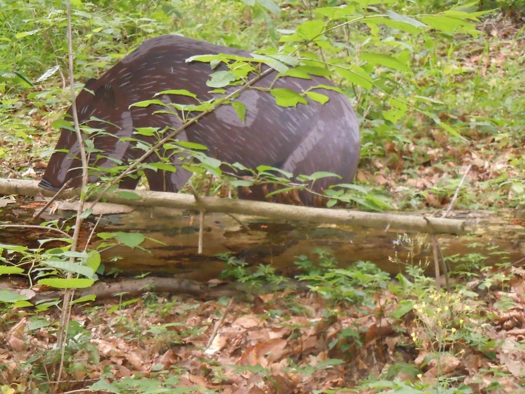 An der nächsten Station beobachten wir aufmerksam, was im Wald versteckt ist...