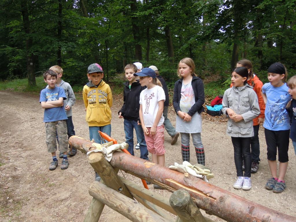 Staunend hören wir, was unsere nächste Aufgabe ist: Baumstämme sägen!!!