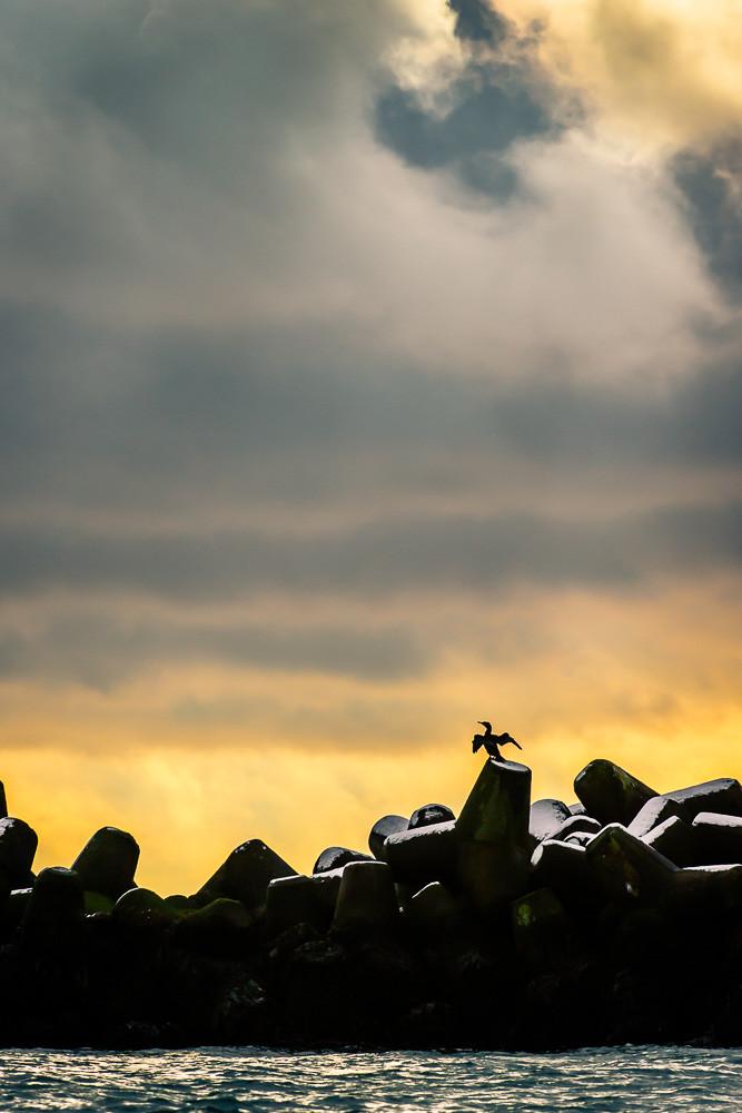 Kormoran im Abendlicht - Helgoland im Dezember