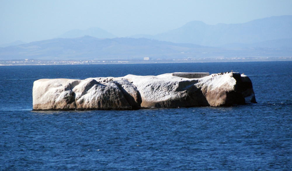 Rock outcrop with Cape Cormorants near Simon's Town