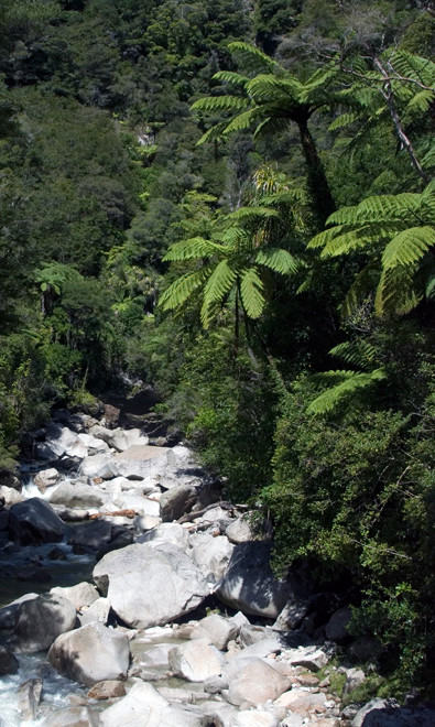 Tree ferns and skeletal bleached rocks on the Wainui Falls walk.