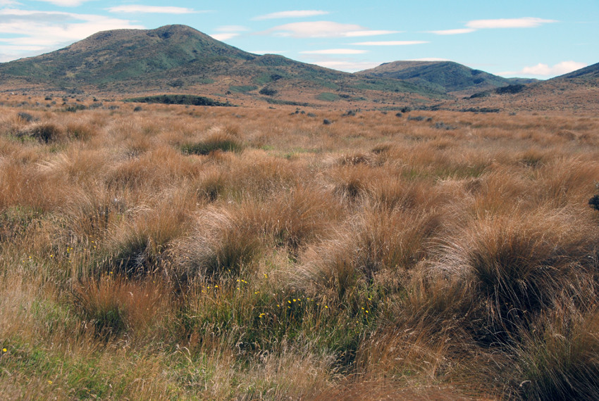 Red tussock grassland on the way to Mossburn, Southland, New Zealand.