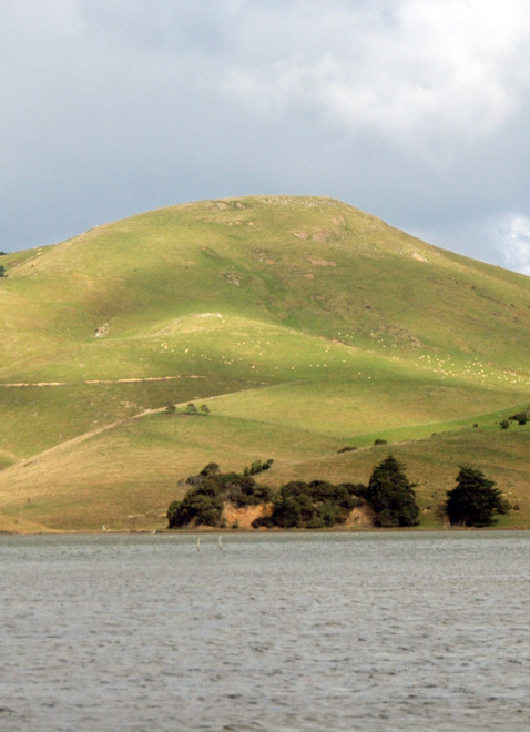 The bare sculpted hills of the Otago Peninsula echo recumbent human forms