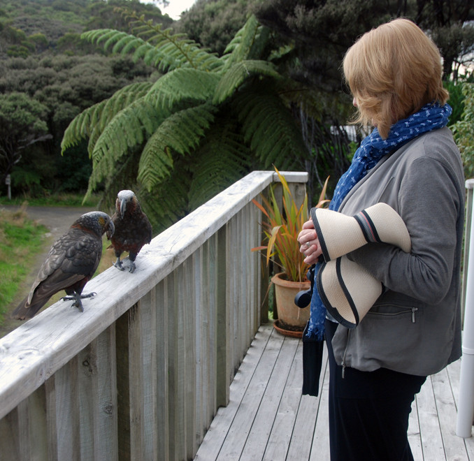 Kakas for Scott? Stewart Island.