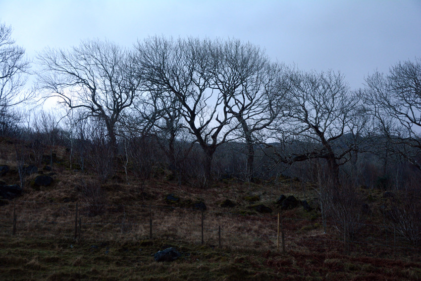 The most northern Ash wood in Scotland and the UK at Rassal on the back road to Shieldaig.