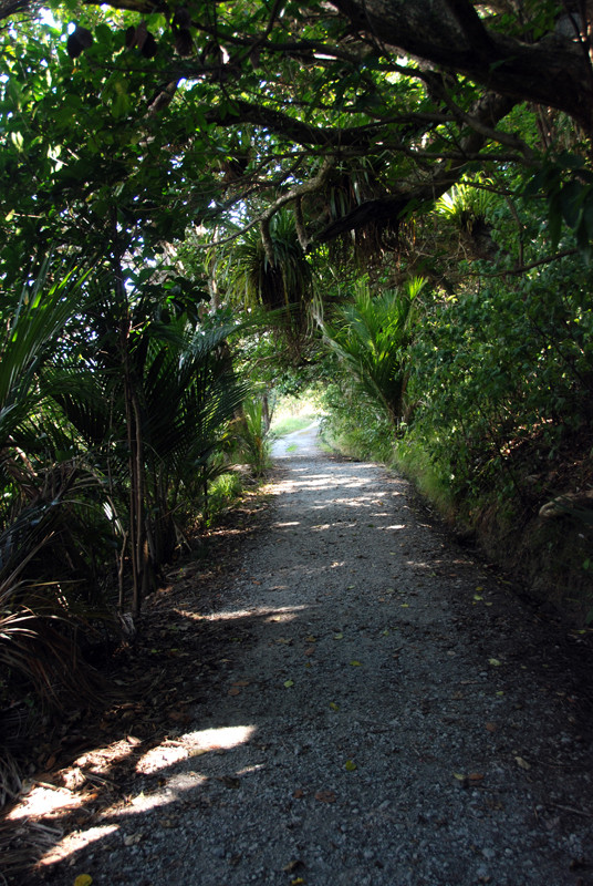 Young Nikau palms and tree festooned with epiphytes at Mahurangi Regional Park.