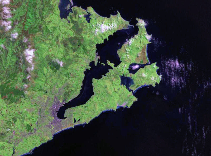 The Otago Peninsula forming the southern arm of Otago Harbour with Dunedin at its western end (Landsat image via WikiCommons)