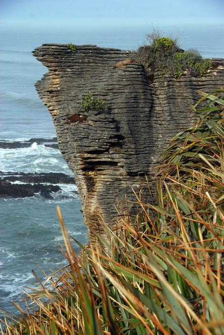 Flax, bedded limestone and Tasman Sea at Punakaiki Rocks.