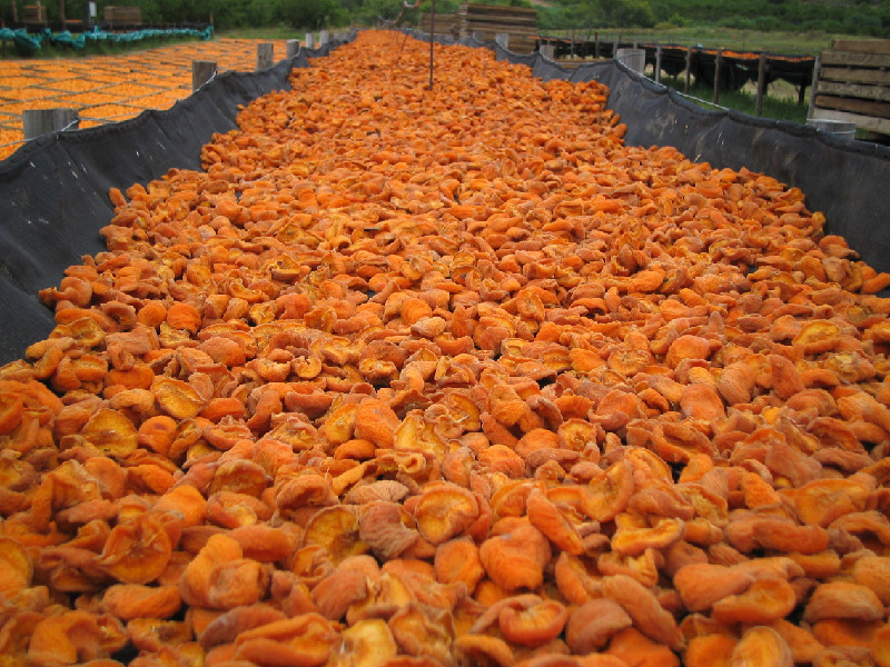Drying peaches at Montagu