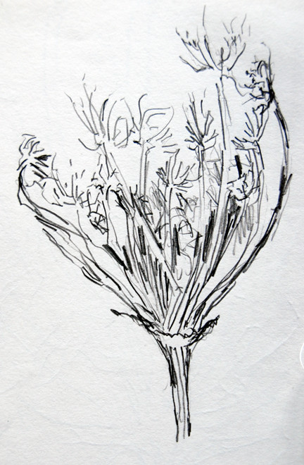 Zennor Coastal Path seed heads 1993 (Pencil) Fergus Murray