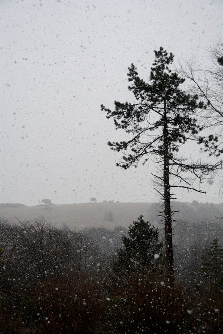 A thick flurry halted window cleaning. We drank tea and stood and watched it fall.