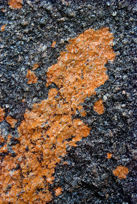 Course granite and orange lichen on Boulder Beach, Ulva Island.