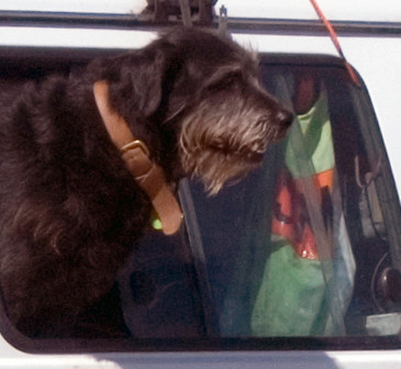 Shaggy dog doing road inspection work on the way to Anatori.