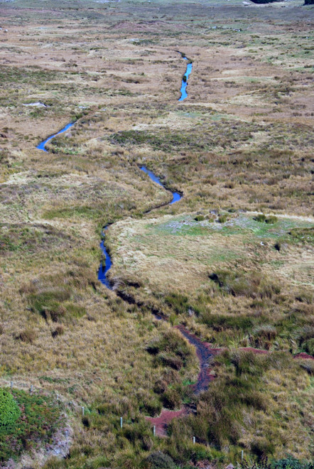 Meandering stream in the the Okia Flats Reserve