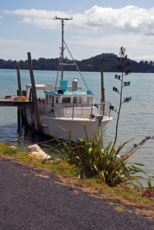 Fishing boat, flax and Pied Shag at Coromandel Harbour.