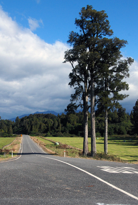 Blue skies, empty roads and beech trees: Reefton to Moana road