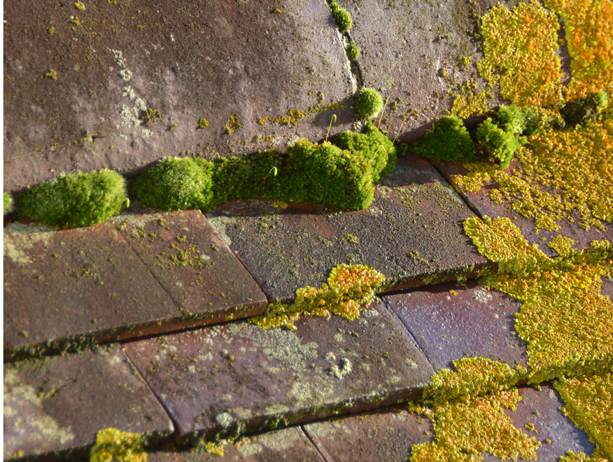Sun on the roof garden: moss and lichens at 09.18.