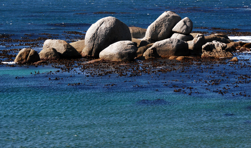 Boulders and kelp forest