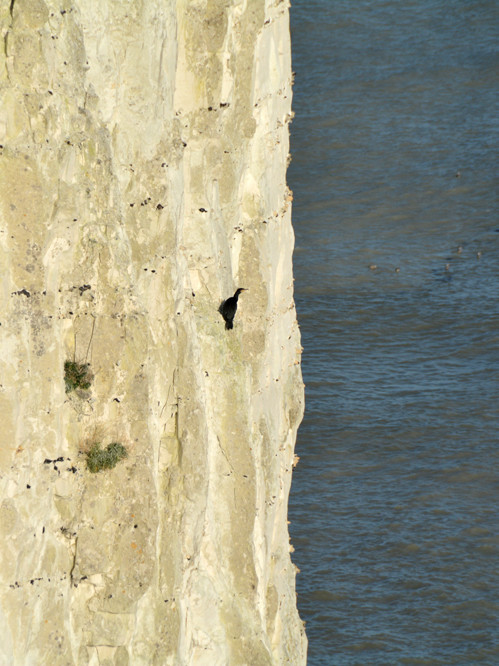 Fancy a shag on cliff - it's all about the punctuation.