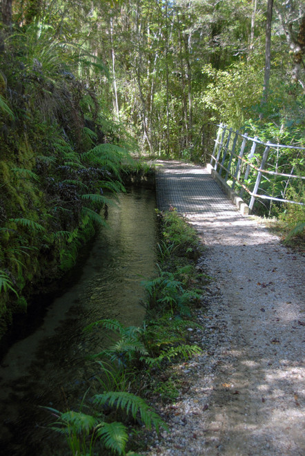 The leat and pathway on the shaded side of the Campbell Creek valley on the Hydro Walk, Golden Bay.