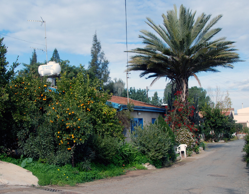 House with date palm and mandarin tree