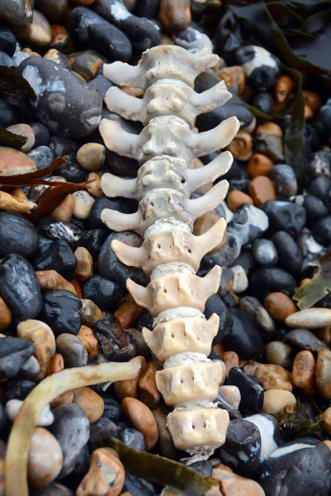 Backbone - seal?