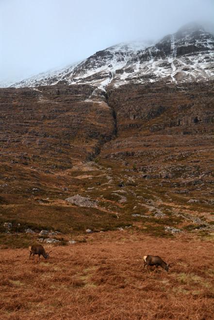 Red deer, moorland grasses, bracken, heather and rock on the lower slopes of Liathach in Glen Torridon in December 2014.