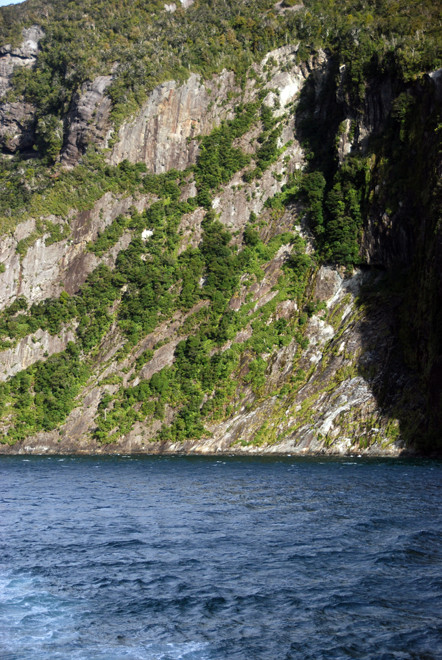 A skein of rain forest clings to the cracks and ledges created by the passing of numerous editions of the Milford Sound glacier.
