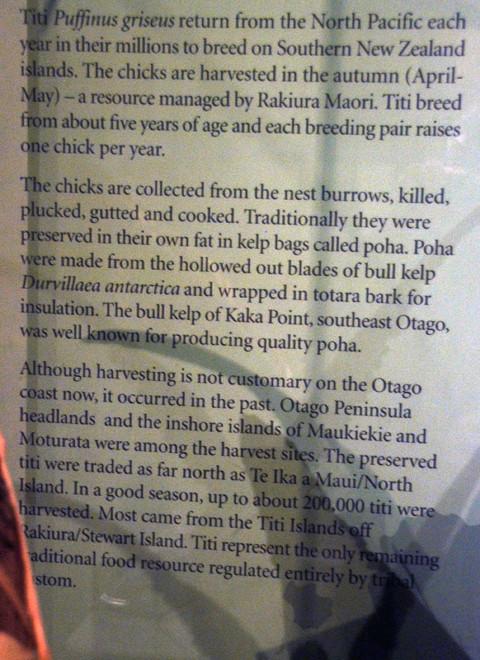 From the Muttonbird display at the Otago Museum in Dunedin. ('Rakiura' is the Maori name for the Stewart Island)