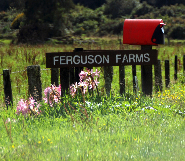Ferguson Farms sign with flowers and red mailbox