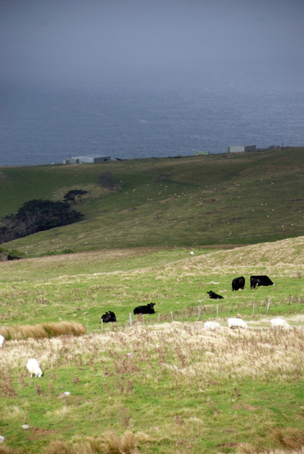 Farming on the edge of the world: Cape Saunders, Otago Peninsula