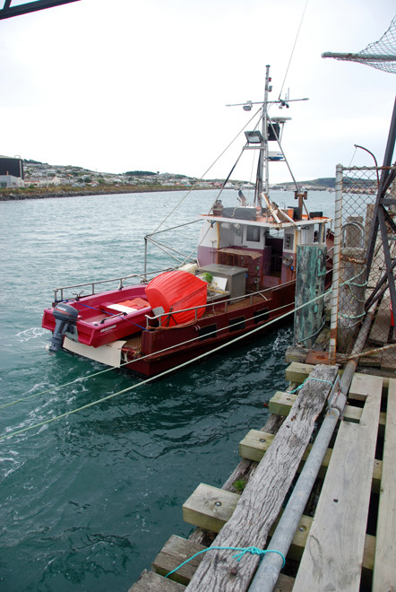 Day boat, Bluff Harbour.