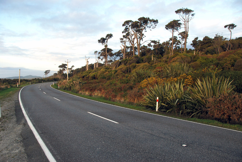 Coastal forest at Bruce Bay on National Highway 6 from Haast to Fox Glacier in New Zealand.