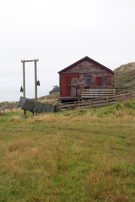 Sheep shed on Sandymount, Otago Peninsula