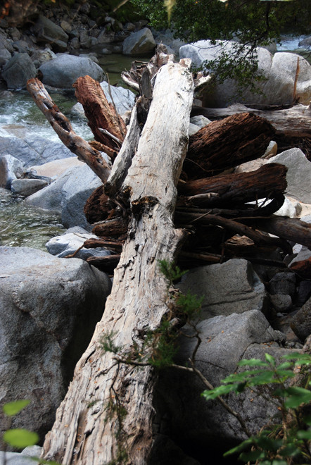 The size of the logs washed down the Wainui River attests to the strength of flow during flooding.