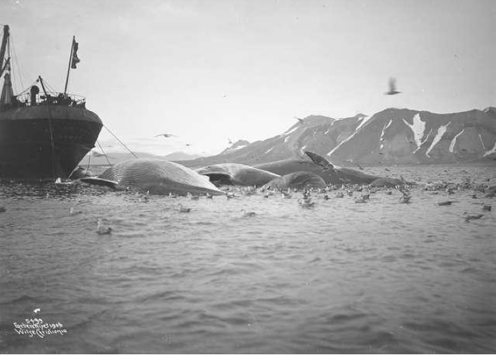 Spitsbergen Bell Sound with the whaler  'og Maaker' taken by Anders Wilse in 1906 (National Library of Norway http://www.nb.no/nbsok/nb/36a2defad502a0962eceb167f2803d2b?index=12#drop).
