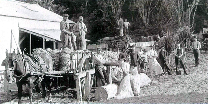 The Mangakarau flax mill in the early 1900s. Hanks of processed flax were baled up and shipped out to export markets from West Whangaui Inlet (Tyree Studio, Nelson Provincial Museum).