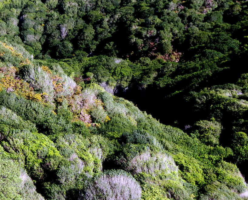 The coastal bush of the Abel Tasman National Park on the Taupo Head walk, Golden Bay.