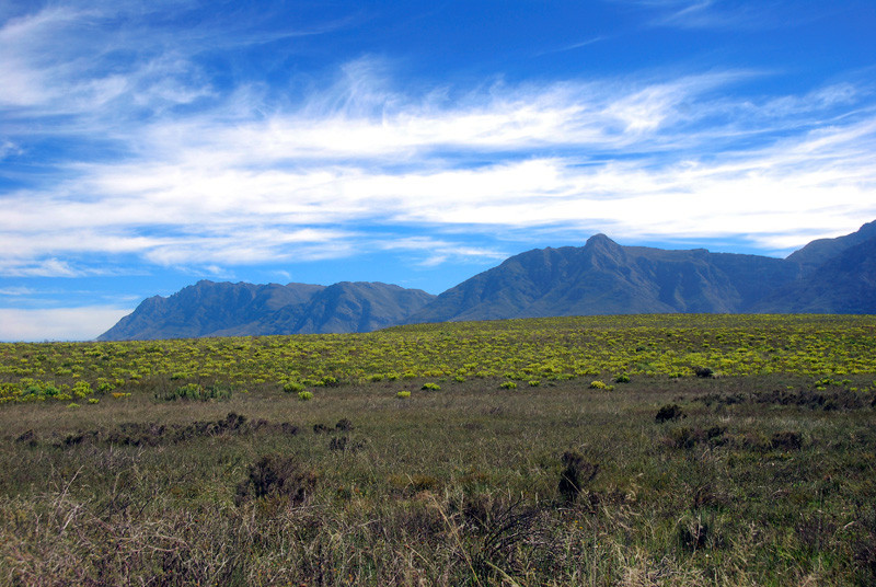 The renosterveld of the Bontebok National Park
