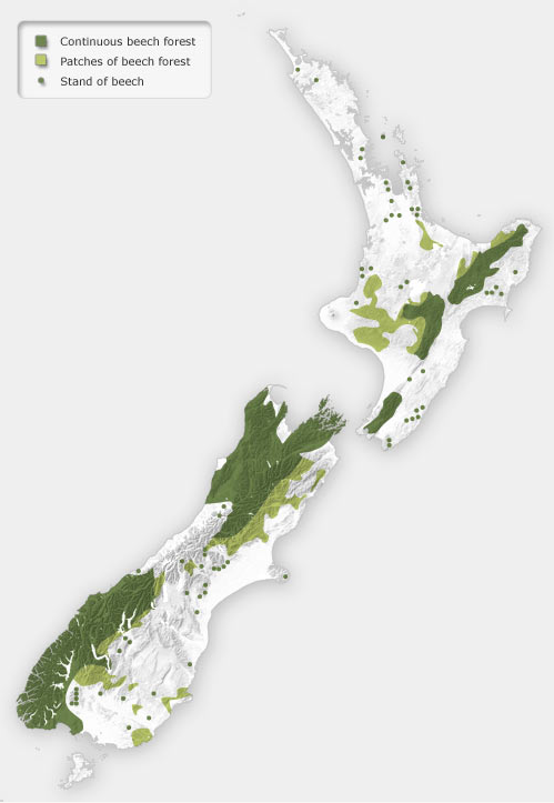 Distribution of beech forest in New Zealand showing the 'beech gap' on the west coast of the South Island (Te Ara: Southern Beech Forests)