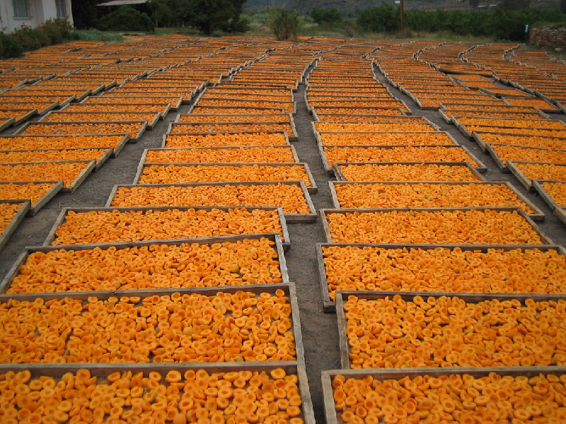 Drying peaches at Montagu. Source: Montagu and Ashton Tourist Board