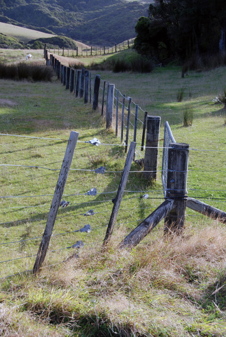 Galvanised wire fencing - a huge revolution in farming and key to winning controllable paddocks from the bush (Near Cape Farewell, South Island).