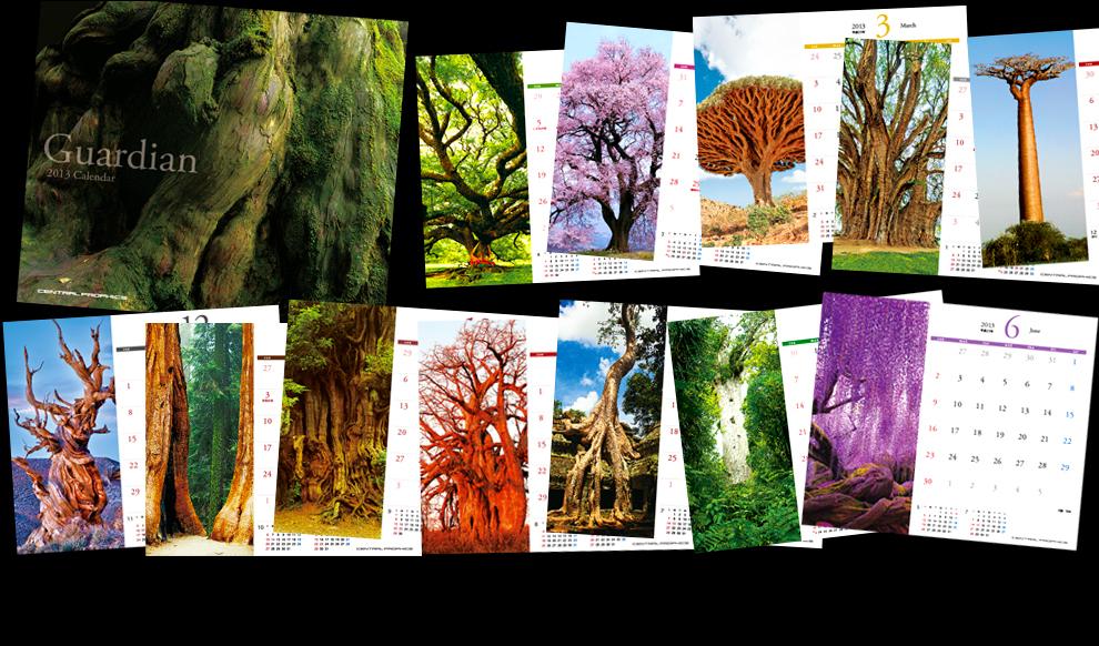 2013年度オリジナル卓上カレンダー「Guardian/ガーディアン(守り神)」というタイトルにて、世界各国の巨樹をテーマとして構成いたしております。知られざる巨樹達の堂々とした姿を1年に渡ってお楽しみいただけます。