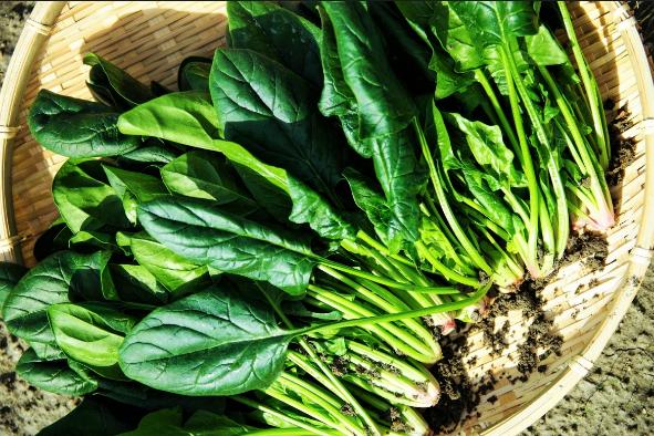 Spinaci: vitamine, fibre e poveri di calorie