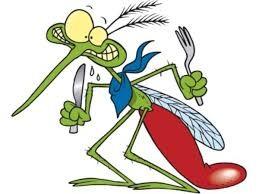 Come difendersi dalle punture di insetti, zanzare, api, vespe, calabroni