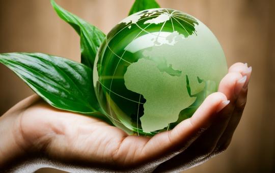 Alimenti biologici: pro e contro