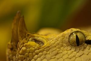 Fotoworkshop, TerraZoo,Naturfotografie,Reptilien, Schlangen,Makrofotografie