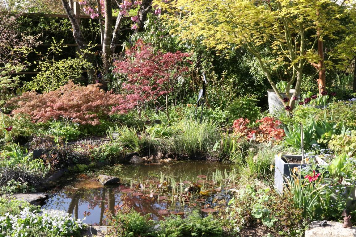 Le bassin entouré d'Acers